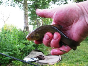 2013-06-25 Steve Mini Tench