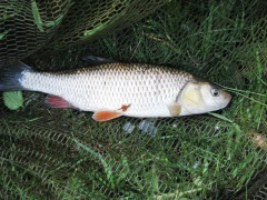Staffs-Worcs Canal - 19/07/2013 - 12oz Chub