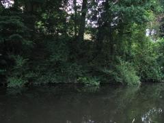 26-07-2013 Staffs-Worcs Canal, Wombourne