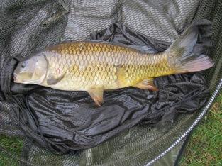 3lb 8oz Common Carp