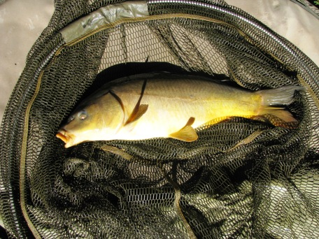 2014-07-04 Steve 4lb 8oz Leather Carp 01
