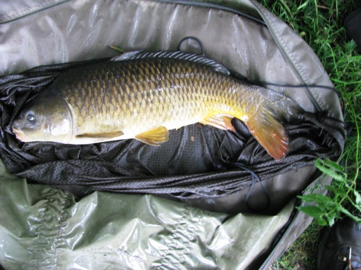 2014-07-04 Steve 7lb 11oz Common Carp 01