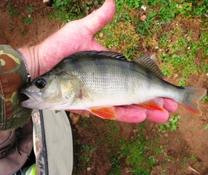 2015-08-11 A Handy Sized Perch