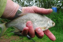 2016-05-20 Valley View - Steve 6oz Bream