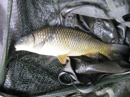 Steve - 3lb 14oz Common Carp