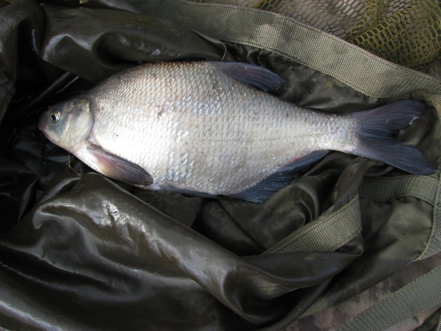 2017-02-24-steve-1lb-9oz-bream-02