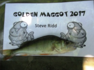 2017-07-08 Golden Maggot - Perch