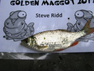2017-07-08 Golden Maggot - Rudd