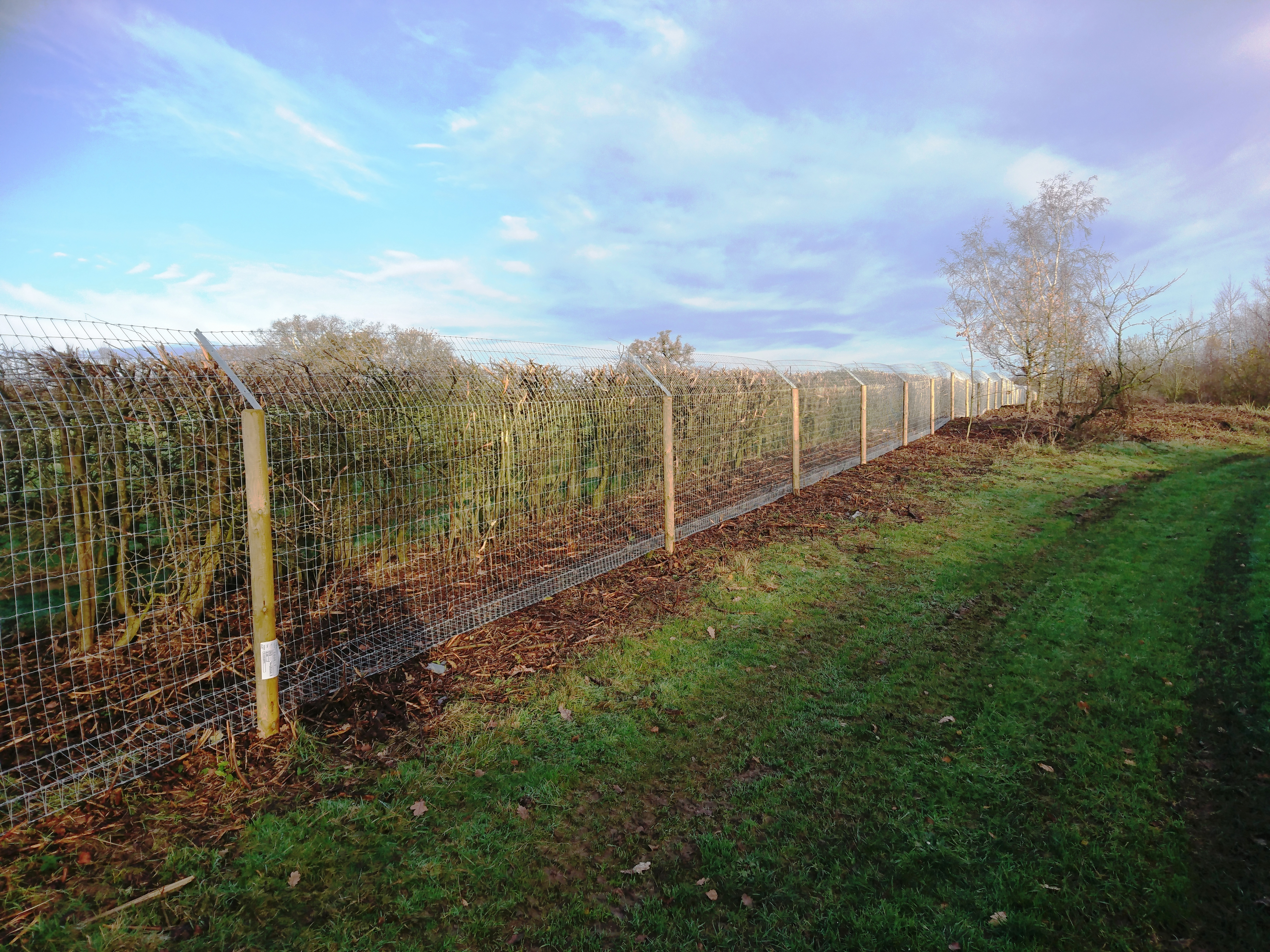 2020-11-23 Otter Fencing