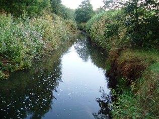 2011-09-17 - Swim 1 (Bridge) upstream