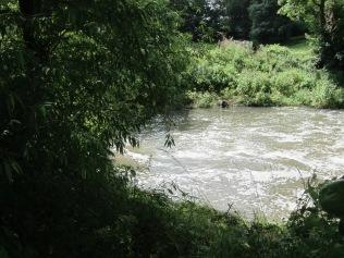 2021-07-08 Weir Pool 02