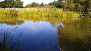 2021-09-22 Mill Ponds 01